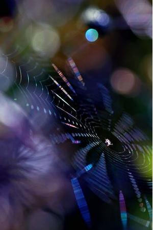 2013-10-18クモの巣写真