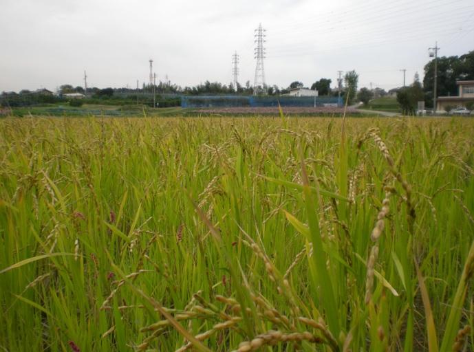 2013-11-9孫生え風景