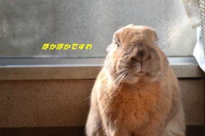 068_20131204130150315.jpg