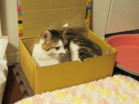 やっぱり箱って落ち着くのね
