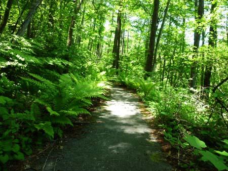 妖精の棲む森 2