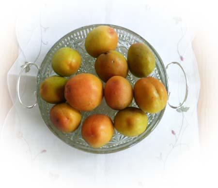 杏 初収穫
