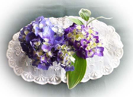 紫陽花が開きました