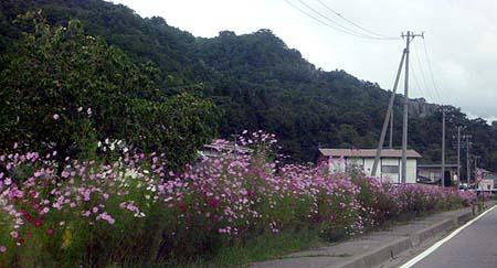 2 秋桜街道