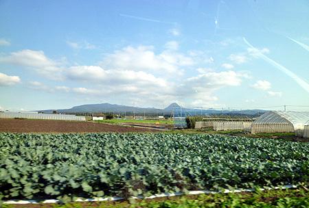 赤城高原ゴボウ畑