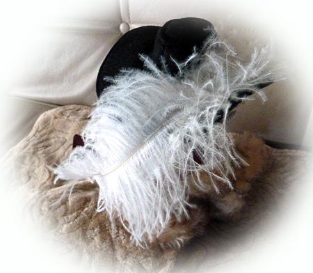 帽子の羽根