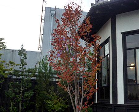大和屋さん入口の紅葉