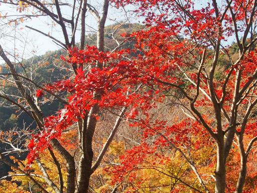 20131116・中津川1-11