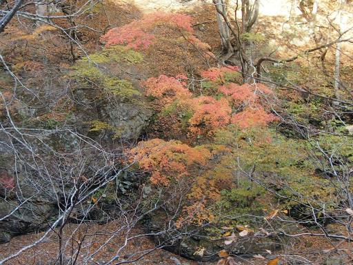 20131116・中津川5-09