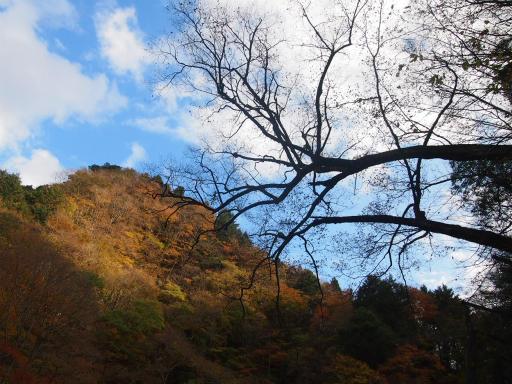 20131116・中津川空2-04・仏石山遊歩道
