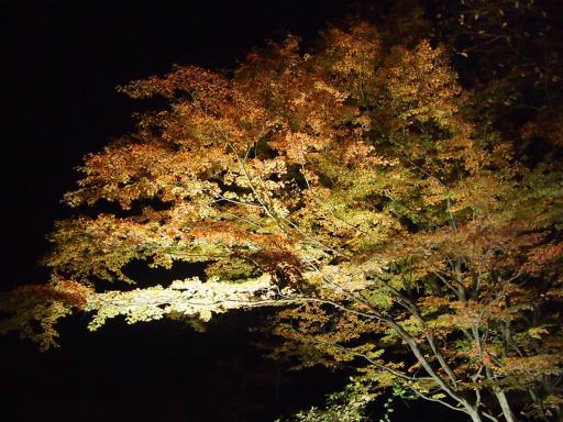 20131116・中津川空2-08・金蔵落しの渓流