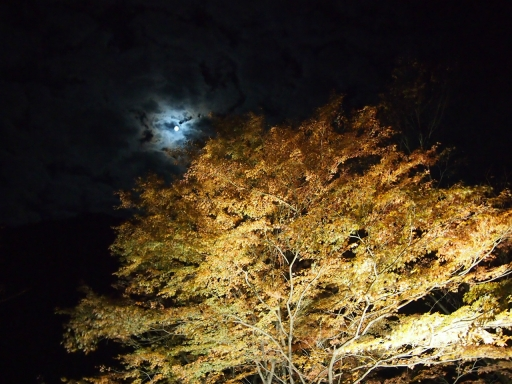20131116・中津川空3-12・大・金蔵落しの渓流