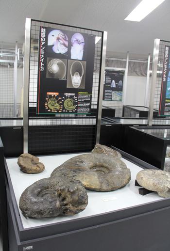 秋田大学鉱業博物館-18