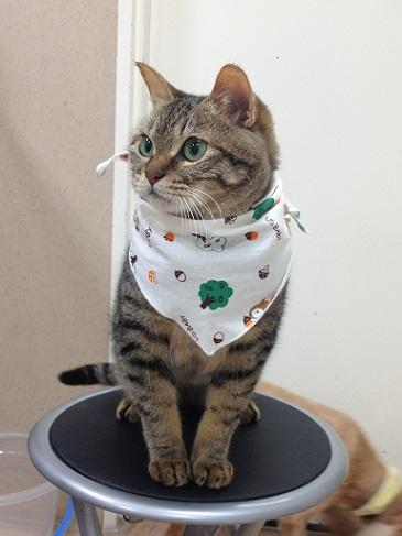 スカーフさんちゃん