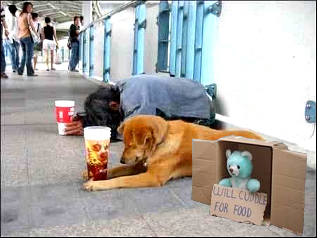 begging bear