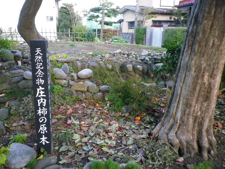 庄内柿 原木