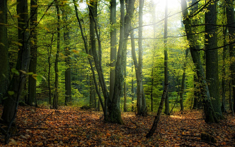 Fairy-forest.jpg