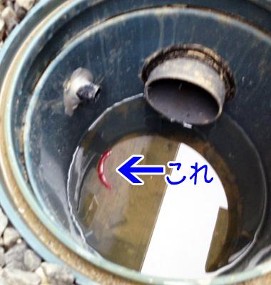 雨水桝に蚊取り線香in