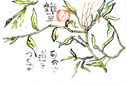 0925雑草