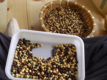 大豆選別作業