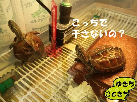 1418181425024_convert_20141210192215.jpg