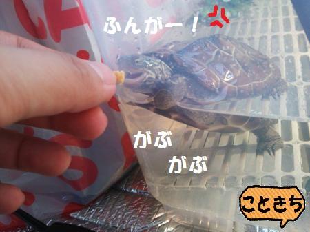 1418275546008_convert_20141212151912.jpg
