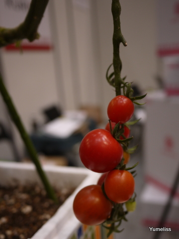 家庭菜園「花くらす野菜くらす」
