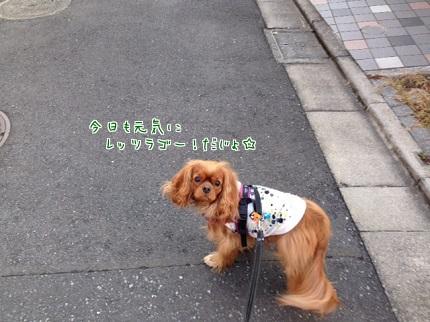 嵐丸 2013.11.6-3
