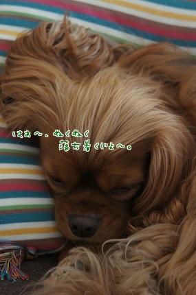 嵐丸 2013.11.9-2