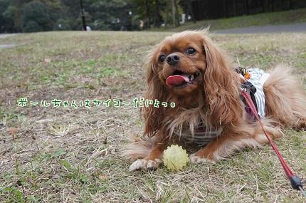 嵐丸 2013.11.11-3