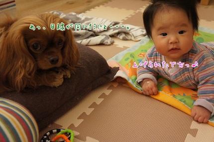 嵐丸 2013.11.12-1