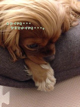 嵐丸 2013.11.18-1
