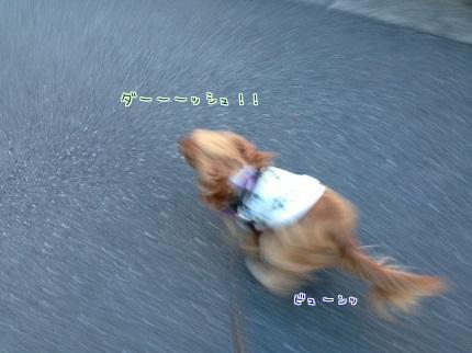嵐丸 2013.11.20-4