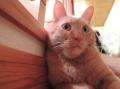 snap_tonekori6_20135219439.jpg