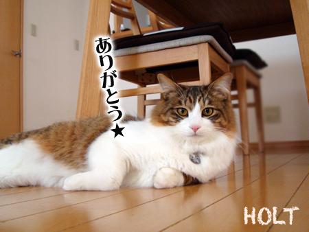 ほると2013.3.31②
