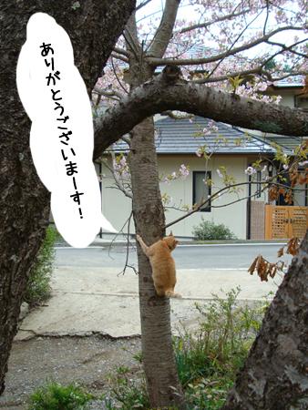 団長より2013.4.12②