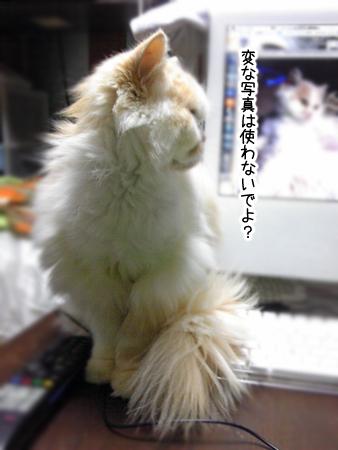 ぶーこ2013.4.13④