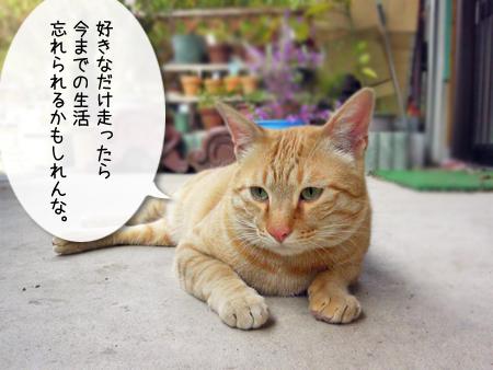 虎次郎団長2013.4.16