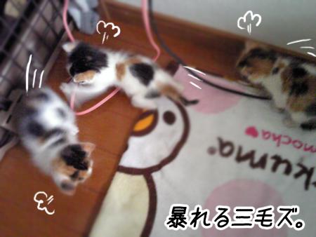 預りっ子2013.5.11④