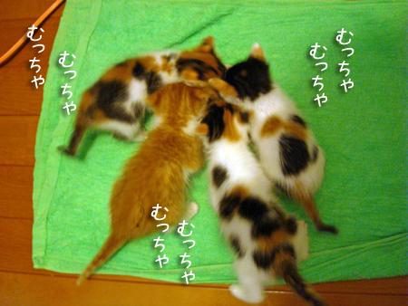 預りっ子2013.5.12