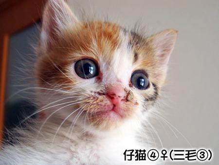 仔猫④2013.5.14-1