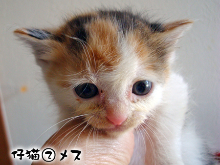 仔猫②-1
