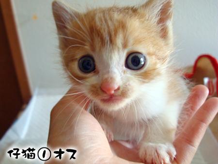 仔猫①-1
