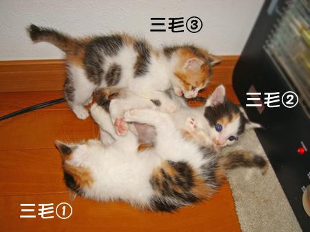 預りっ子2013.5.17①