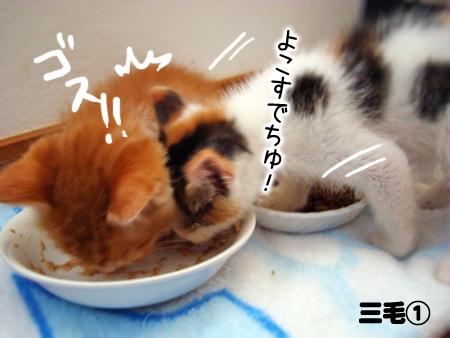三毛①2013.5.21