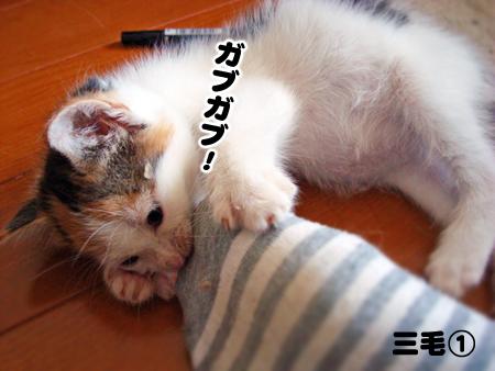 三毛①2013.5.23②