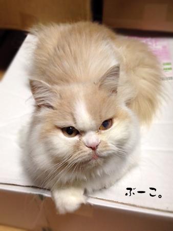 ぶーこ2013.6.6①