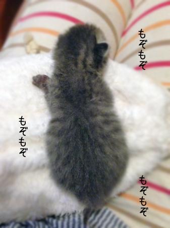 こねこ2013.6.8③