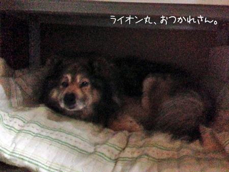 ライオン丸2013.6.9