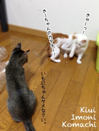 仔猫3匹2013.6.25